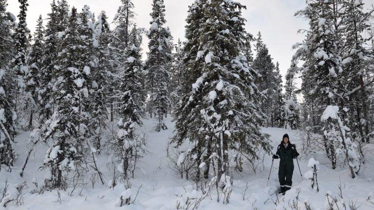 Ciaspolata nei dintorni di Kiruna