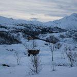 Sulla strada dalle Lofoten alle Vesterålen