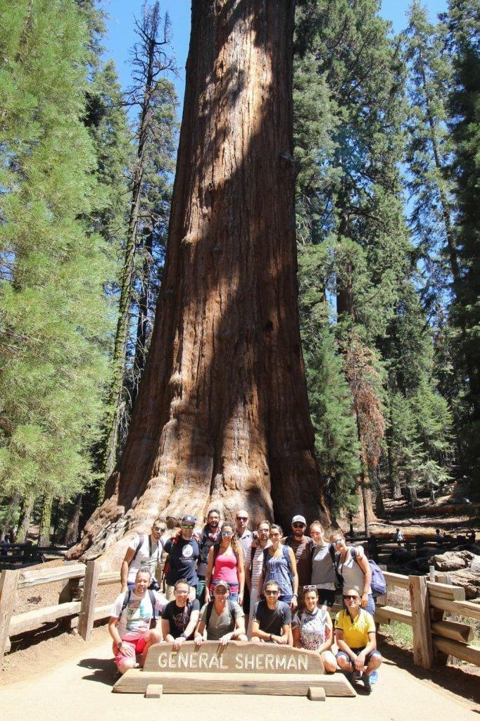 """USA on the road: Il gruppo di Avventure nel mondo davanti all'albero """"General Sherman""""."""