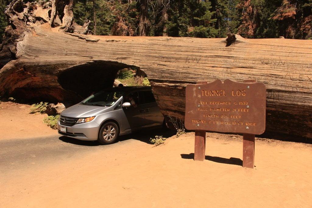 USA on the road: auto che passa all'interno del buco nell'albero, il Tunnel Log.