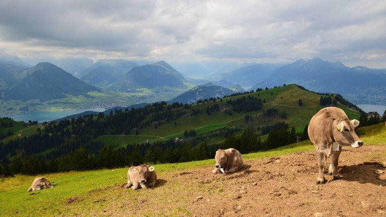 Panorama dal monte Rigi