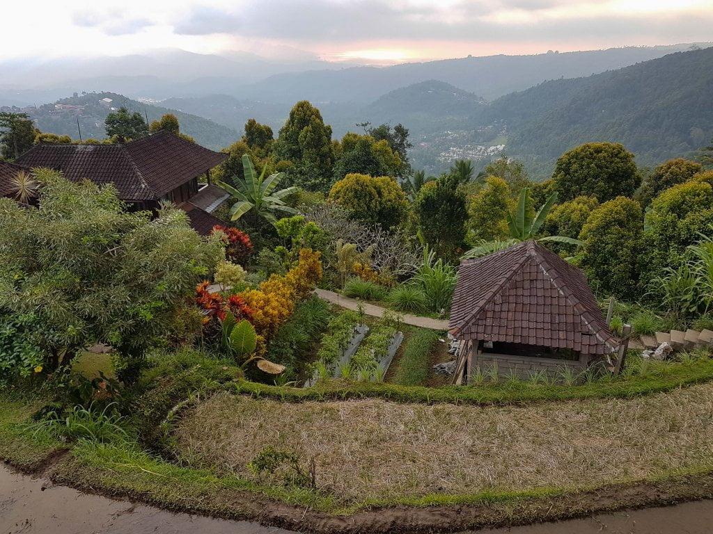 panorama dalla nostra guest house a Munduk