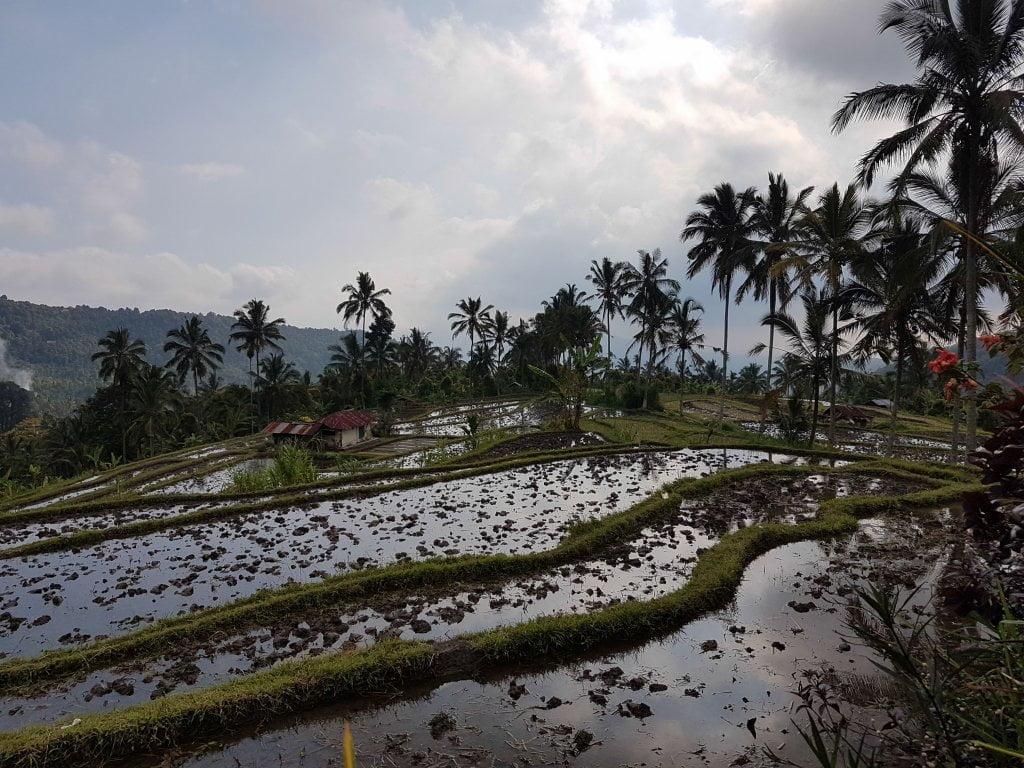 Cosa vedere a Bali: risaie a Munduk.